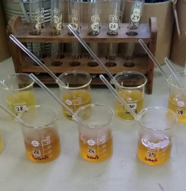 Estudio revela que la miel de la región NEA se caracteriza por su origen floral nativo