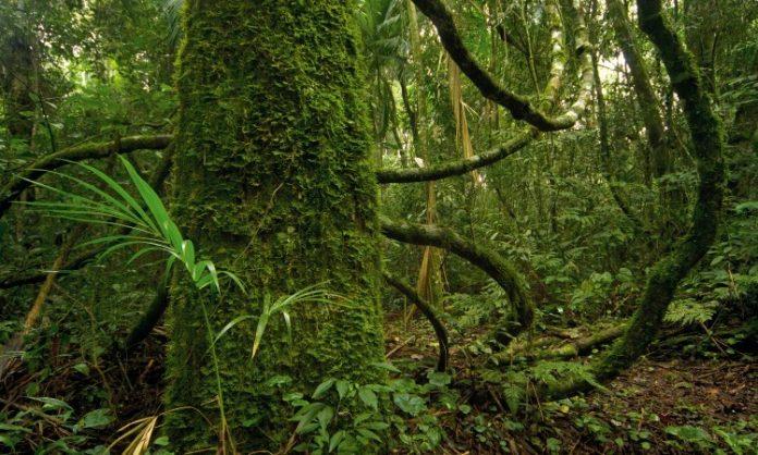 Mediante la biotecnología intentan reproducir especies de la selva en peligro de extinción