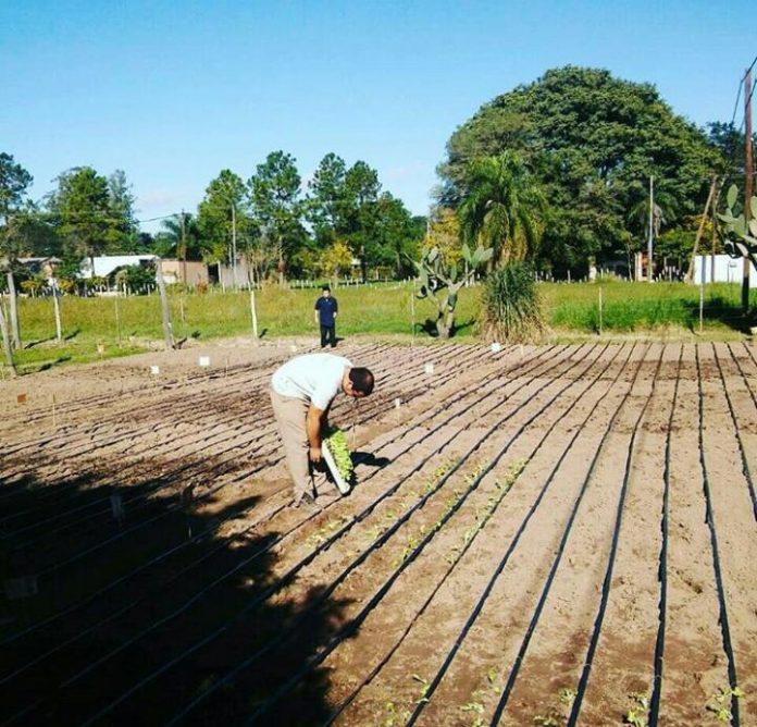 El compost es una enmienda orgánica utilizada para mejorar las propiedades de los suelos por la incorporación de materia orgánica, nutrientes y actividad biológica.