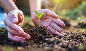 El día del Medio Ambiente deberíamos celebrar cada día, con cada acción y gesto